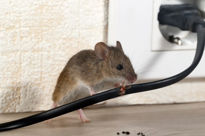 Expert pest exterminators for homes